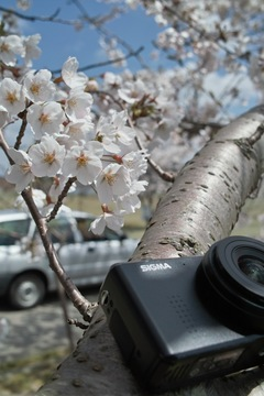 Cherry_Blossoms_and_SIGMA_DP104182012dp2.jpg