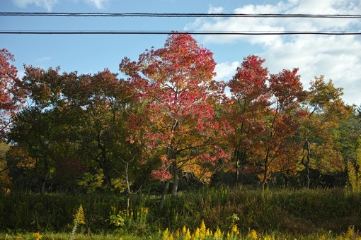 Colored_trees11042014dp2m01s.jpg