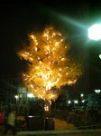 Light-up_tree.jpg